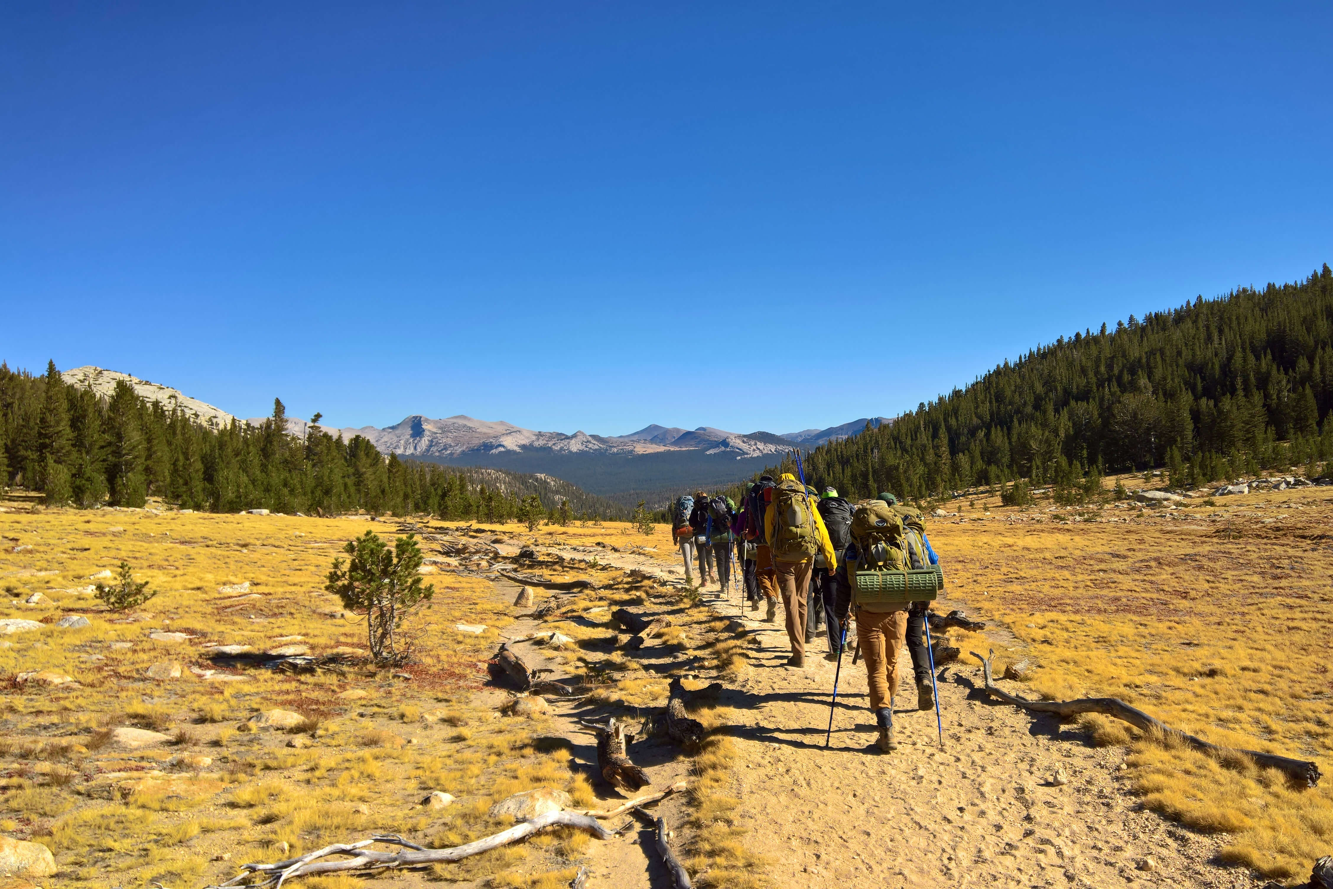 Students walking on a hiking trail through yellow brush towards the mountains
